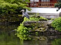 This heron is not usually at the gardens.  He majestically glided down and posed for us.  ssP1160964e
