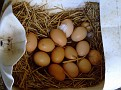 Eggs in nesting box 002