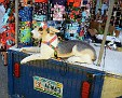 its a fake dogs life