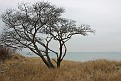 My Favorite Shoreline Tree
