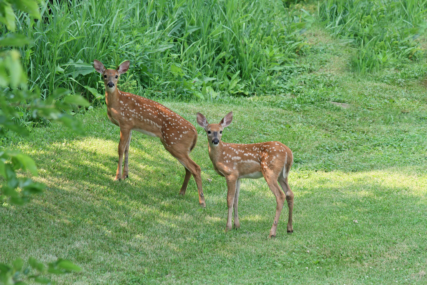 2014 Fawns