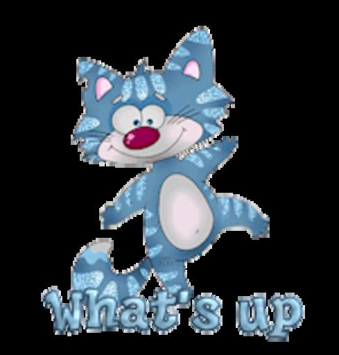 What's up - DancingCat
