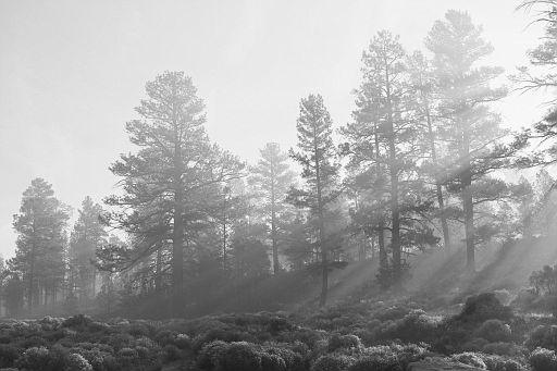 Filtered Light #3 b&w
