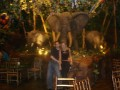 At The Rain Forest Cafe...