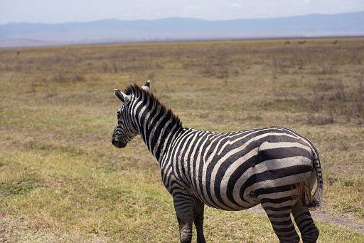 Tanzania 006.jpg