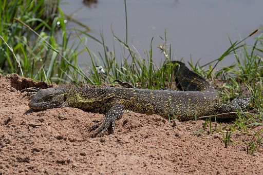 Tanzania 235.jpg
