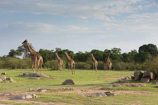 Tanzania 338.jpg