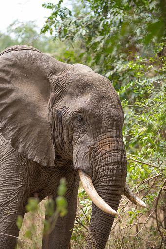 Tanzania 1 1066.jpg