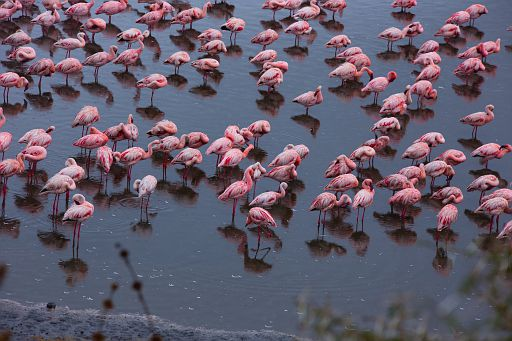 Tanzania 1 152.jpg