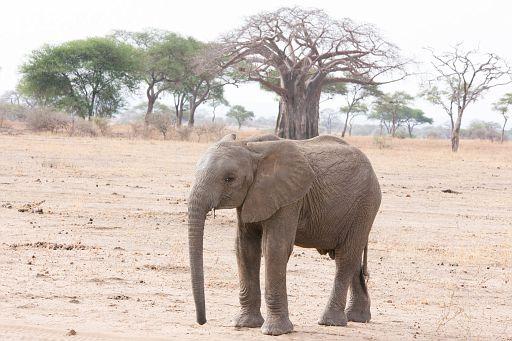 Tanzania 1 817.jpg