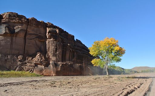 Fall colors at Canyon de Chelly entrance