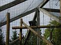 2007 Toledo Zoo 056