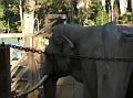 LA Zoo 032