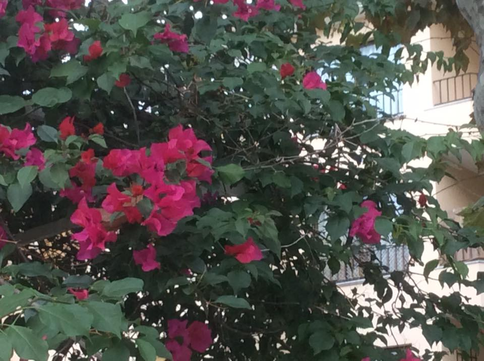 flowers - warm weather