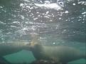 Gary's Underwater Galapagos Shots.