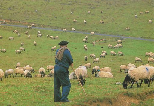 France - Moutons Pays Basque NT