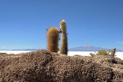 Kaktusowa para