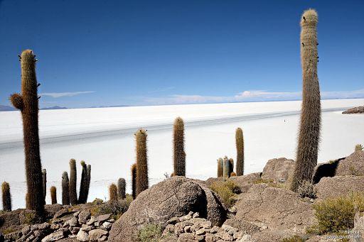 Widok na pustynię solną