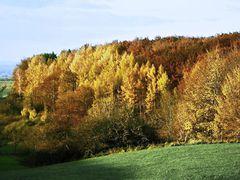 Herbramer Wald